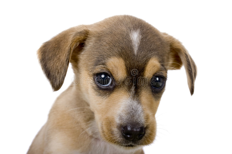 Download Cute puppy stock photo. Image of mongrel, equipment, isolated - 8151750