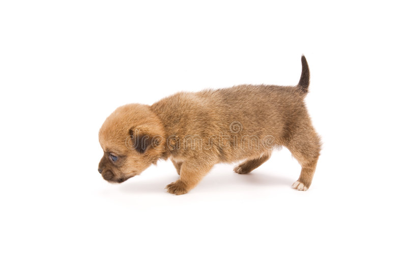 Cute puppy stock photos