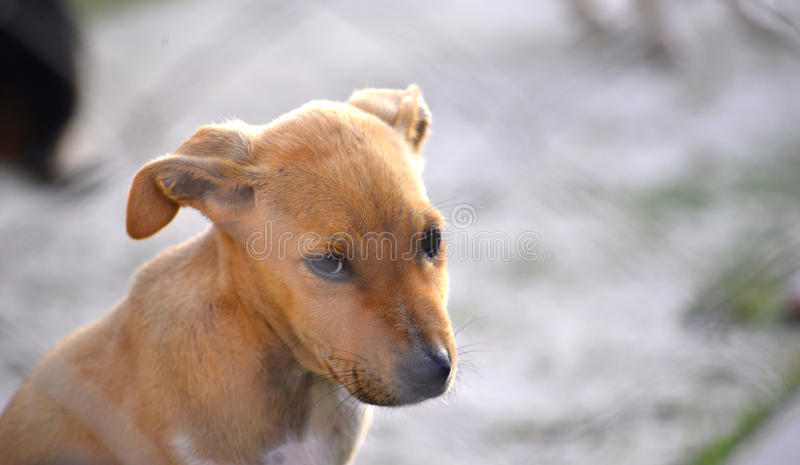 Cute Puppy animal theme. Picture of a Cute Puppies animal theme stock photos