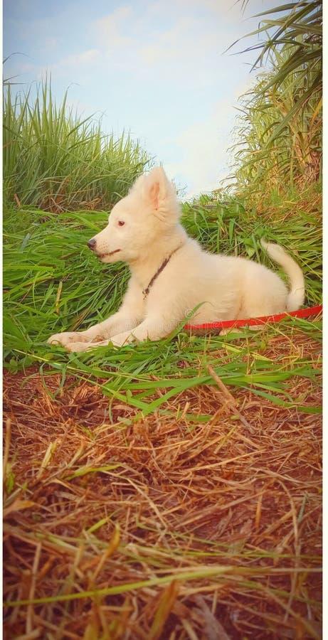 Cute puppy. Beautiful, farm, best royalty free stock image