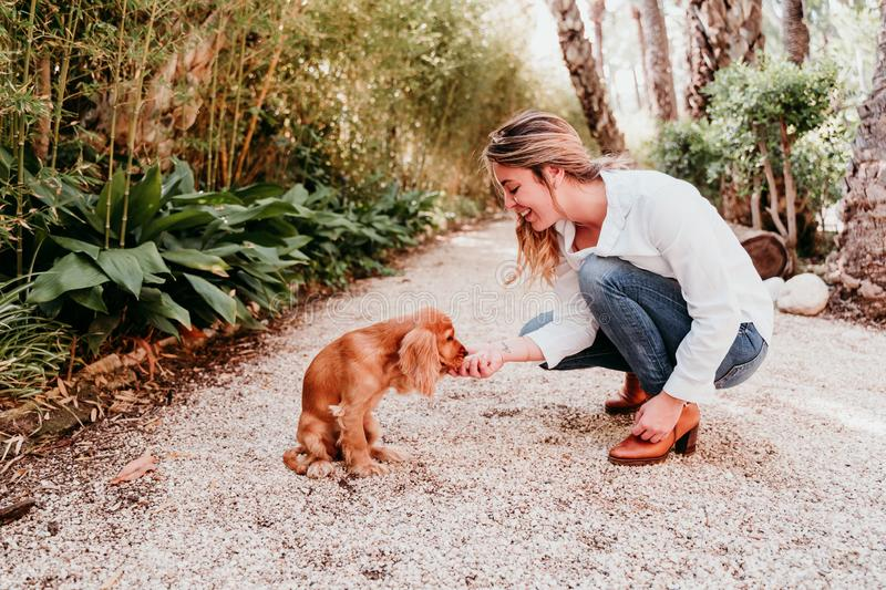 Cute puppy of cocker spaniel dog giving paw to her owner in a park stock image