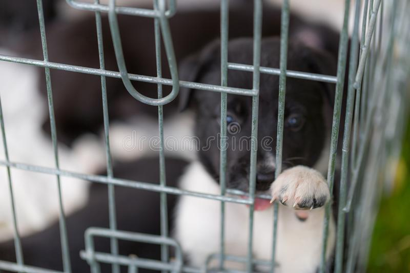 Little puppy playing in grass and having fun outdoors royalty free stock photos
