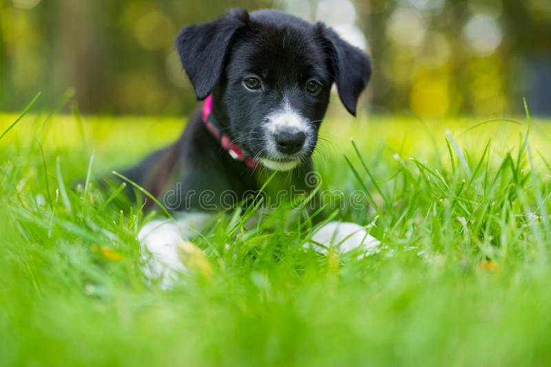 Little puppy playing in grass and having fun outdoors stock images