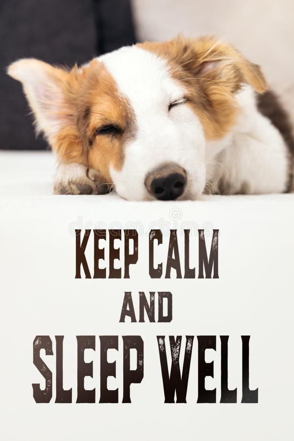 Cute puppy dog sleeping on the couch, english text keep calm and sleep well. Cute mixed-breed puppy dog sleeping on the couch, english text keep calm and sleep royalty free stock photo