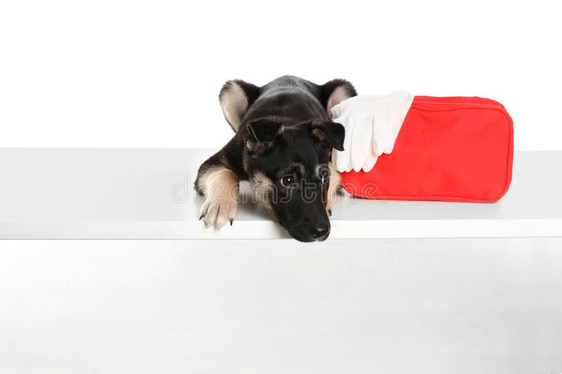 Cute puppy with first aid kit. On white background stock images