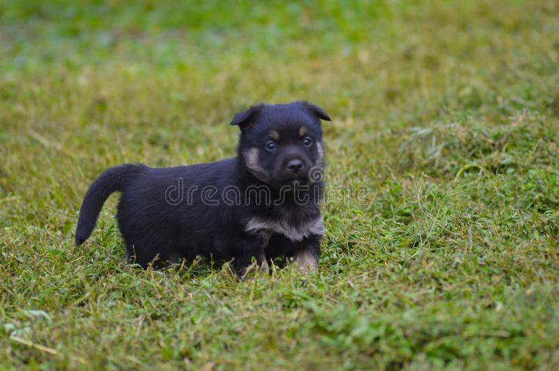 Cute Puppy on the Grass. Funny kid looks away stock images