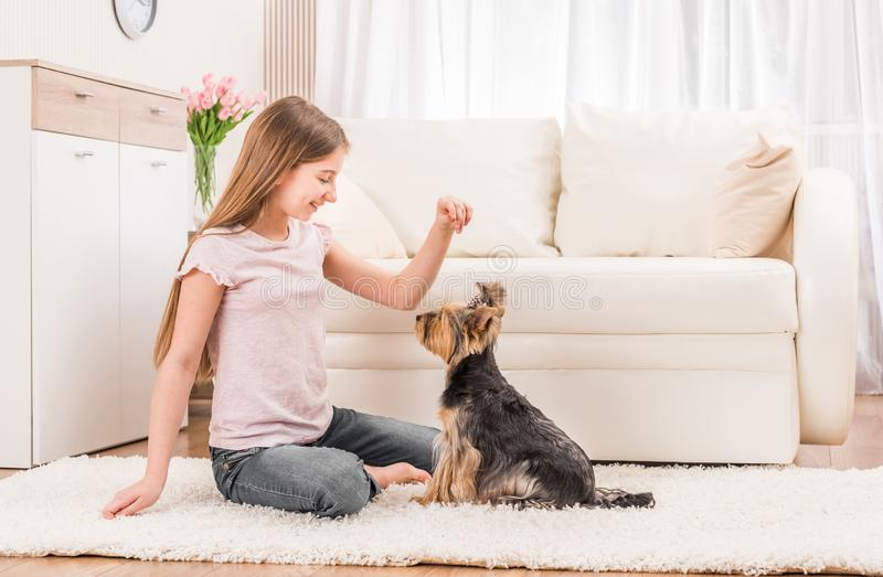 Cute puppy and happy young girl royalty free stock photography