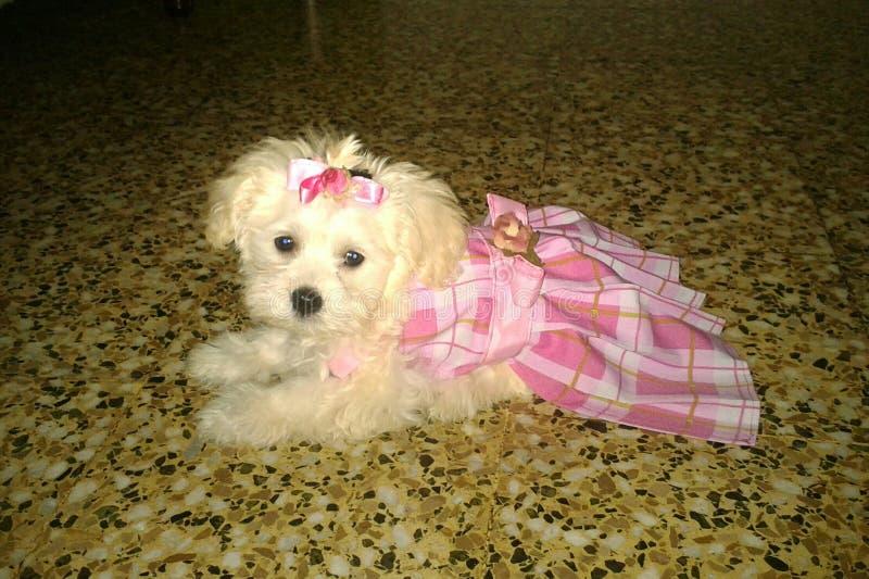 A cute puppy stock photo
