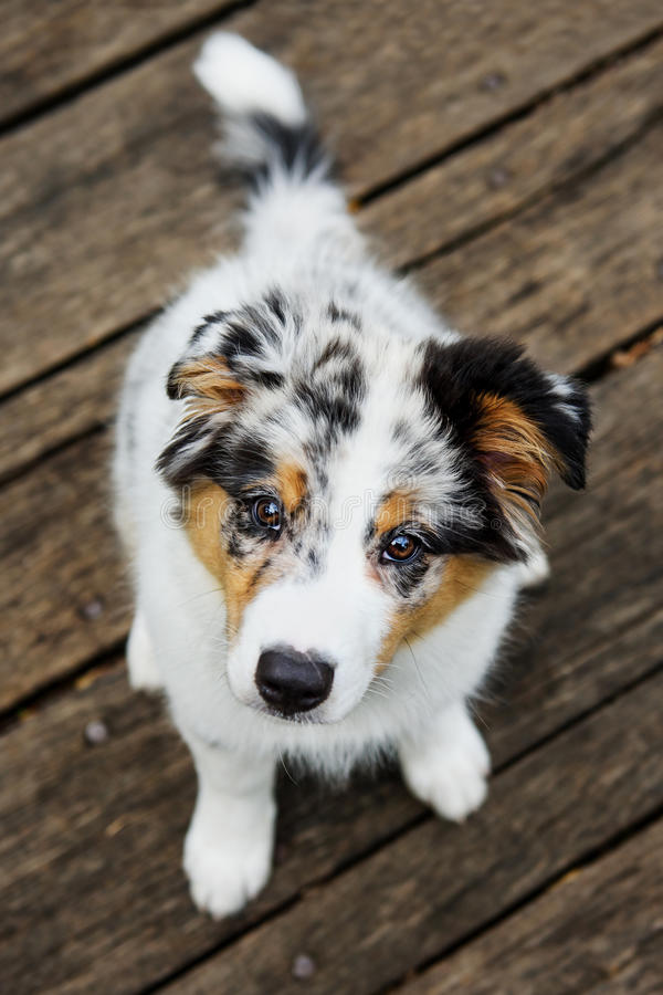 Cute puppy look stock photo