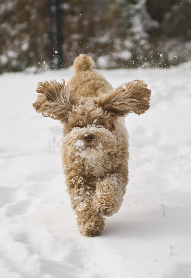 Cute puppy playing in the snow stock photos
