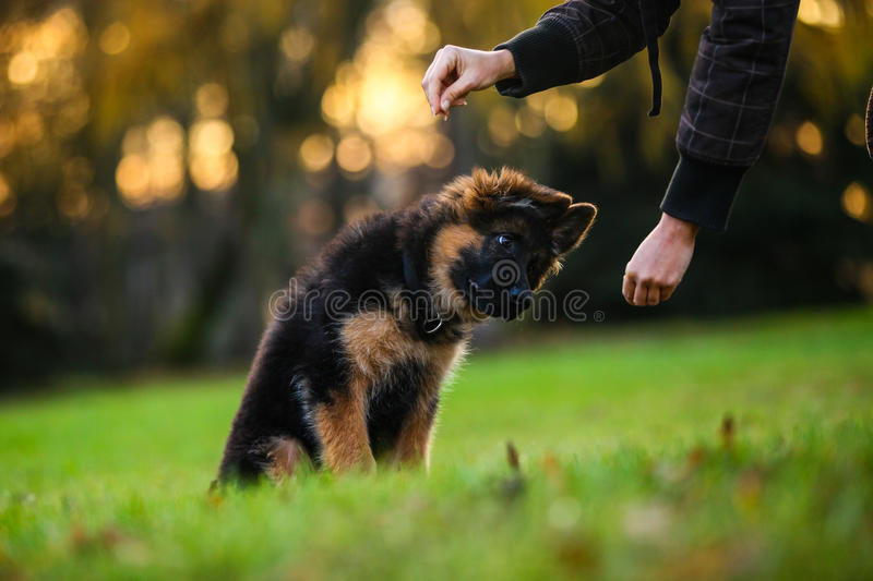 Cute puppy. Cute playing puppy on a walk stock photography