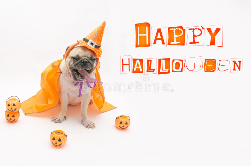 Cute puppy pug dog wearing a Halloween hat. royalty free stock photo