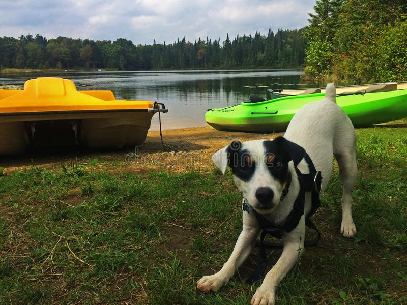 Cute Puppy Ready to Play at the Lake - Dog Body Language stock image