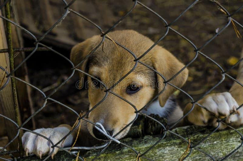 Puppy sad stock image