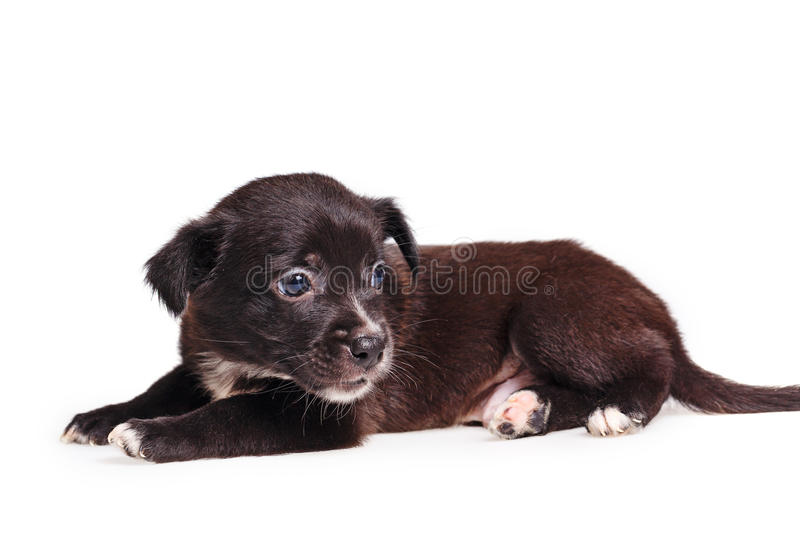 Cute puppy sad. Cute not purebred sad. Pets need our support and care. The owner search royalty free stock photos