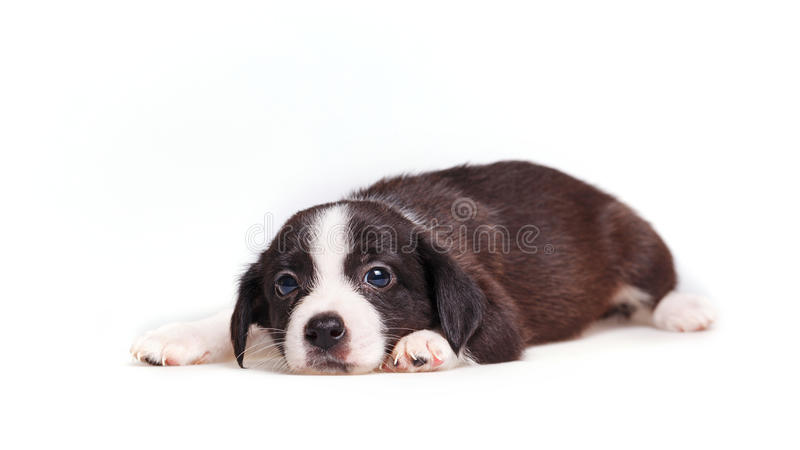 Cute puppy sadness royalty free stock images