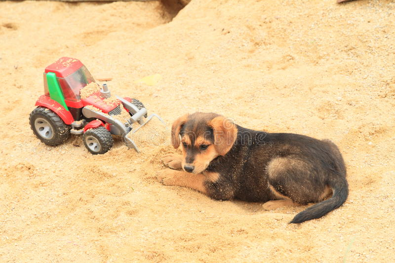 Cute puppy on sandpit. Sad brown puppy lying on sandpit with toy - digger stock photography