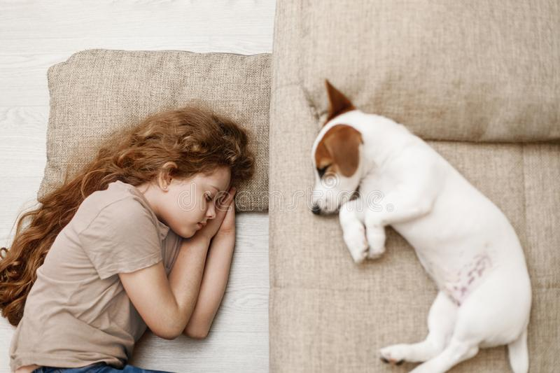 Cute puppy is sleeping on the bed. And the child is sleeping on the floor. Focus to girl. Education, discipline, training concept stock photo