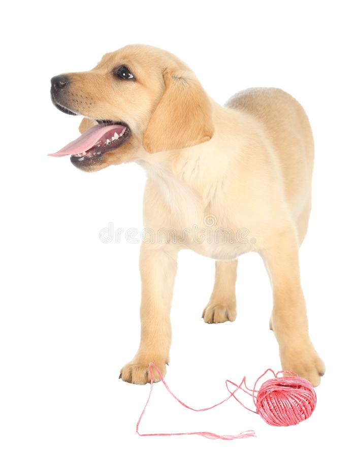 Cute Puppy and String. Adorable puppy with a ball of red string stock photos