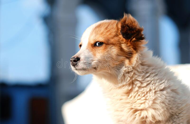 Cute puppy in sunlight royalty free stock photo