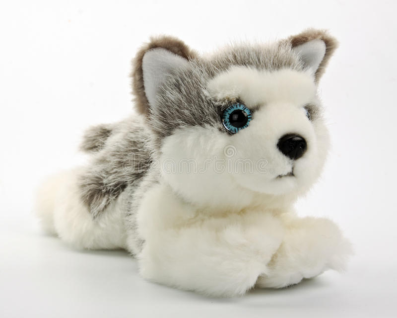 Cute Puppy Toy Shot On White Stock Photos