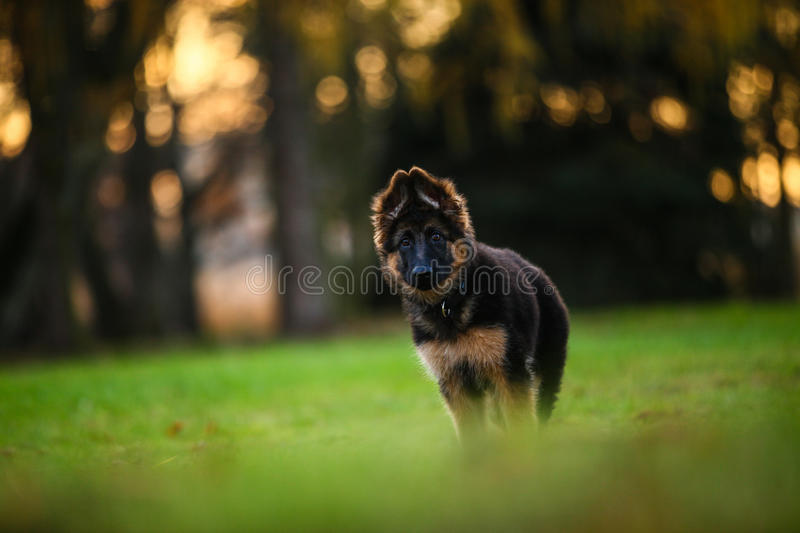 Cute puppy. On a walk stock image