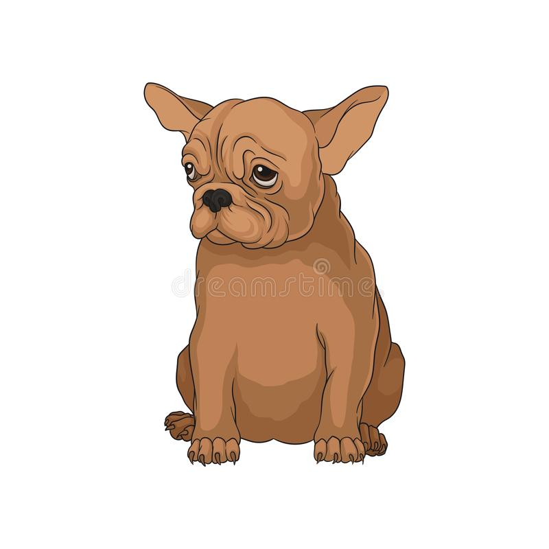 Cute purebred boston terrier puppy in sitting position. Adorable domestic dog with shiny eyes royalty free illustration