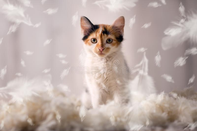 Cute setting in feathers stock image