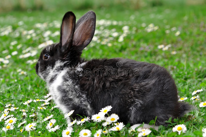 Cute rabbit. In green grass with daisy stock photo