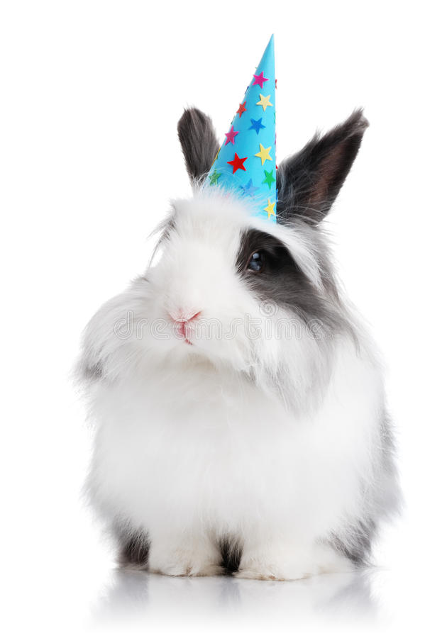 Cute rabbit with a birthday hat on stock image