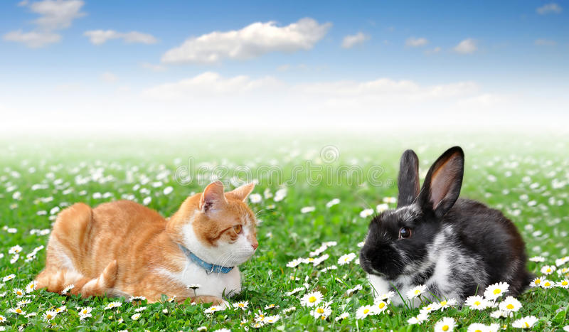 Cute rabbit with cat. In grass stock photography