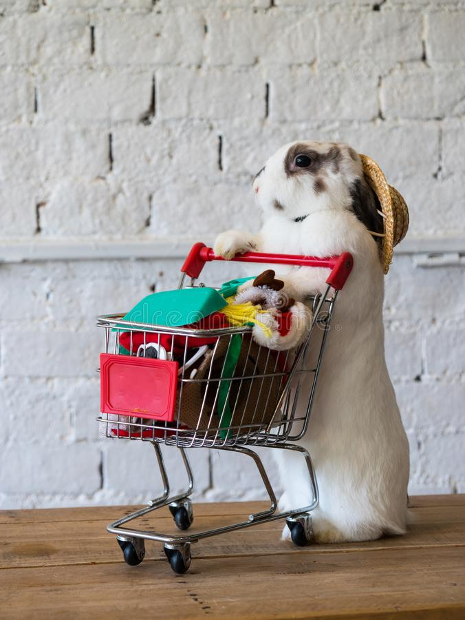 Cute rabbit with full shopping cart illustrate a shopping concept.  royalty free stock images