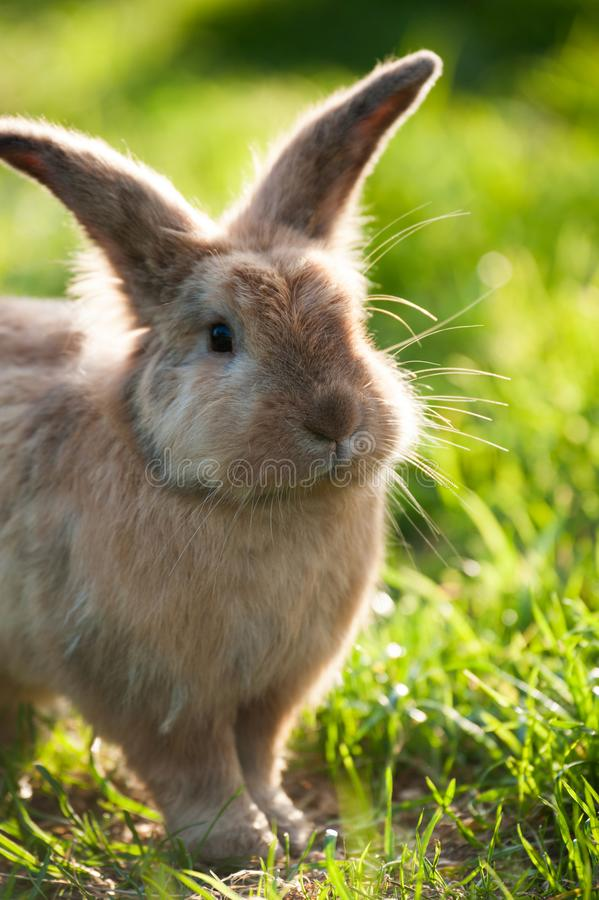 Cute rabbit in a meadow stock photo