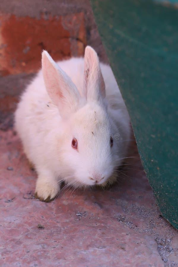 Cute rabbit photoshoot royalty free stock image