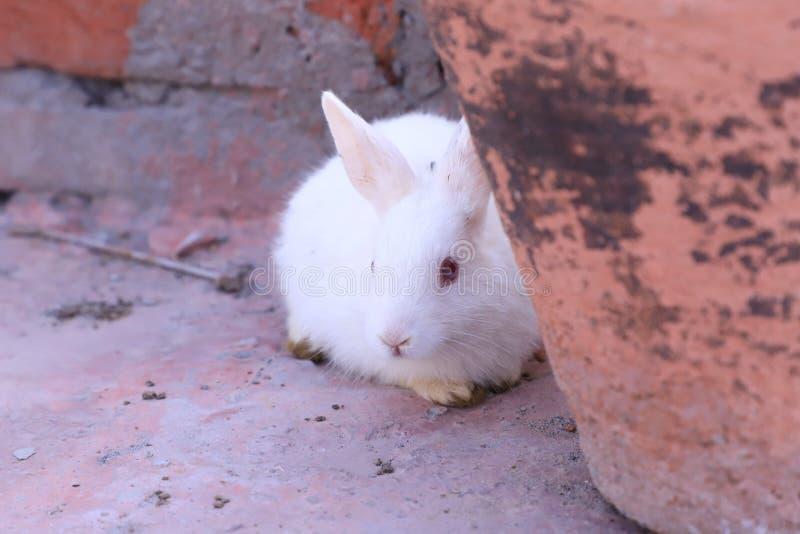 Cute rabbit photoshoot stock photos