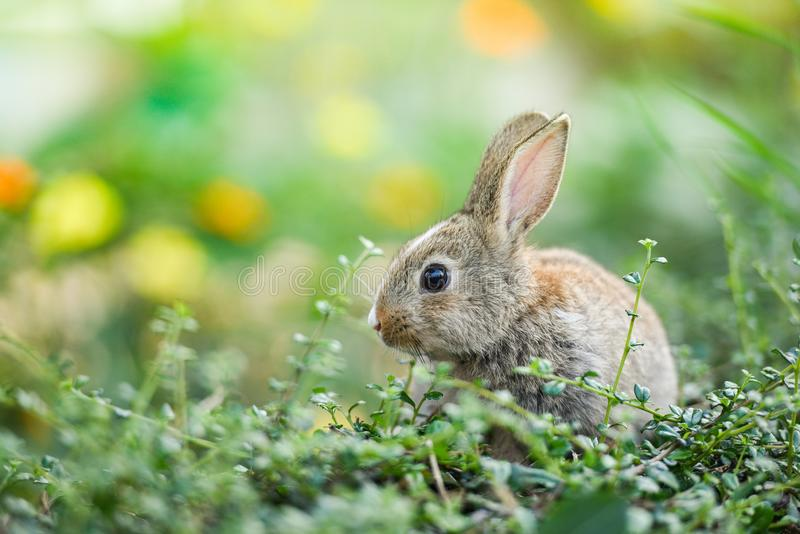 Cute rabbit sitting on green field spring meadow stock photography