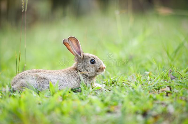 Cute rabbit sitting on green field spring meadow / Easter bunny hunt for festival stock photo