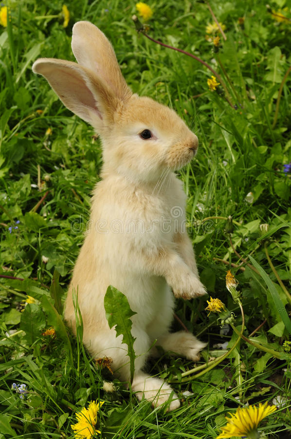 Download Cute Rabbit Standing On Hind Legs Stock Image - Image: 14458891
