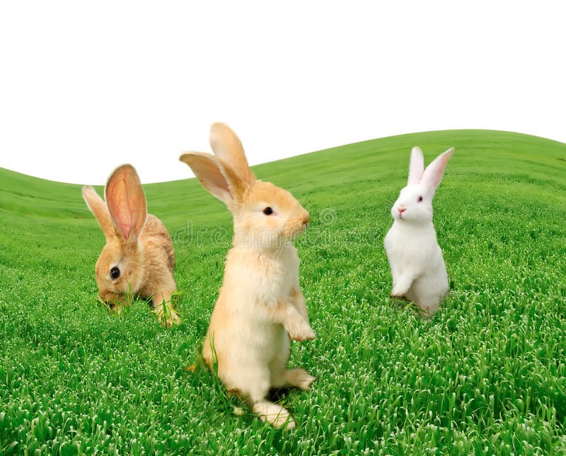 Cute Rabbits in the Field. Three cute rabbits in the field with copy space royalty free stock photos