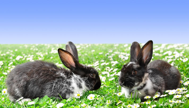 Cute Rabbits. In Grass with Daisies royalty free stock photography