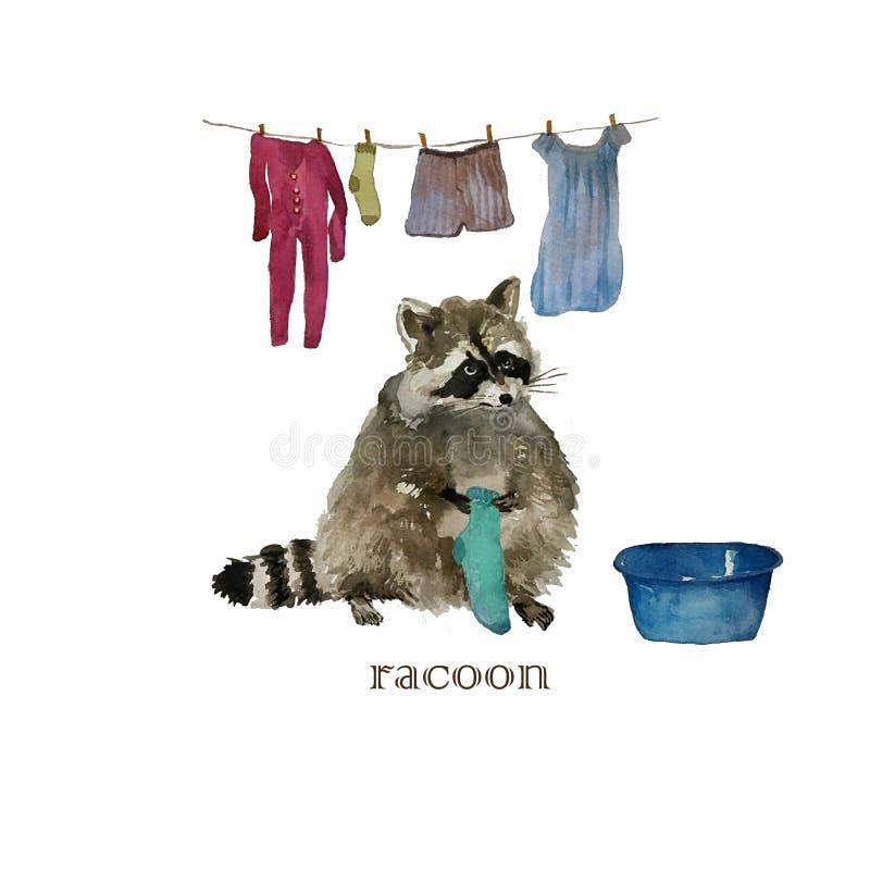 Cute raccoon animal washing cloths. Watercolor. Cute raccoon animal. Watercolor isolated racoon washing cloths vector illustration