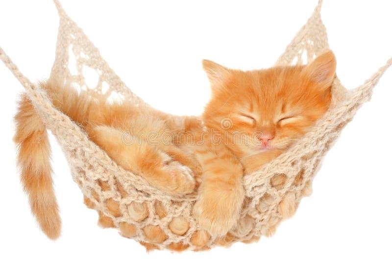 Cute red haired kitten sleeping in hammock stock image