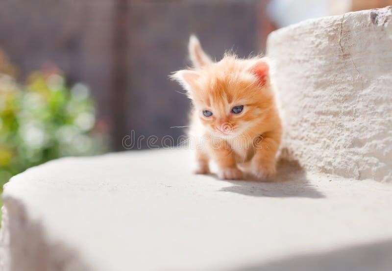 Cute red kitten stock photos