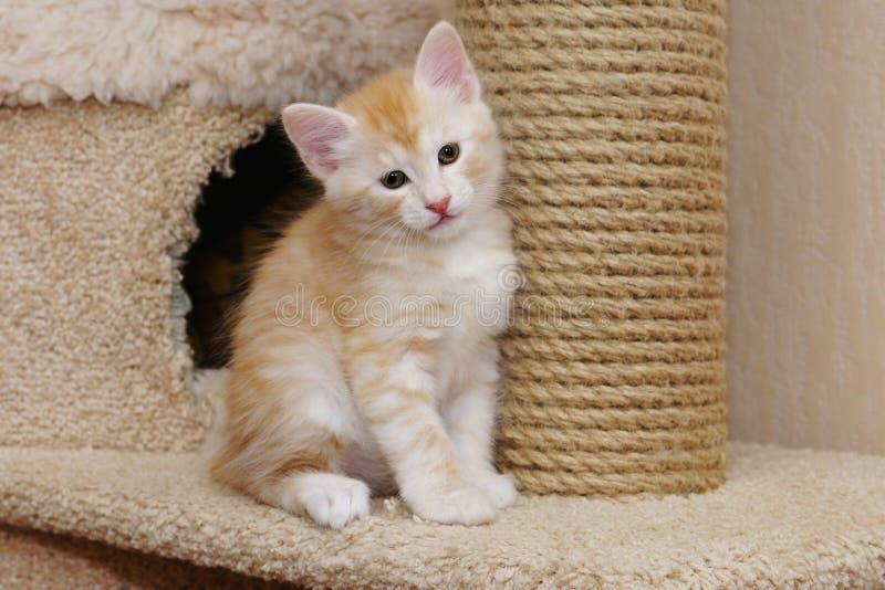 Cute red kitten stock photo