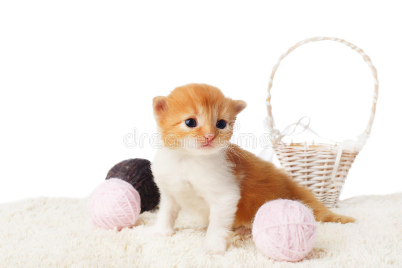 Cute red kitten with yarn woolen balls isolated stock photos