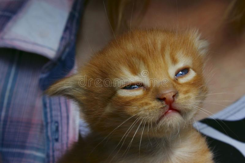 cute red tabby kitten. Animals day, mammal, pets concept. stock photo