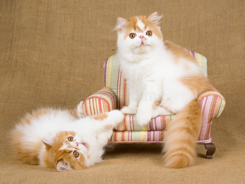 enclosed cat litter boxes