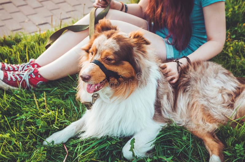 Cute redhead pets relaxing on green grass after long play, have a fun outdoors. Happy young hipster girl in red sneakers with her. Brown dog - best friend royalty free stock photography