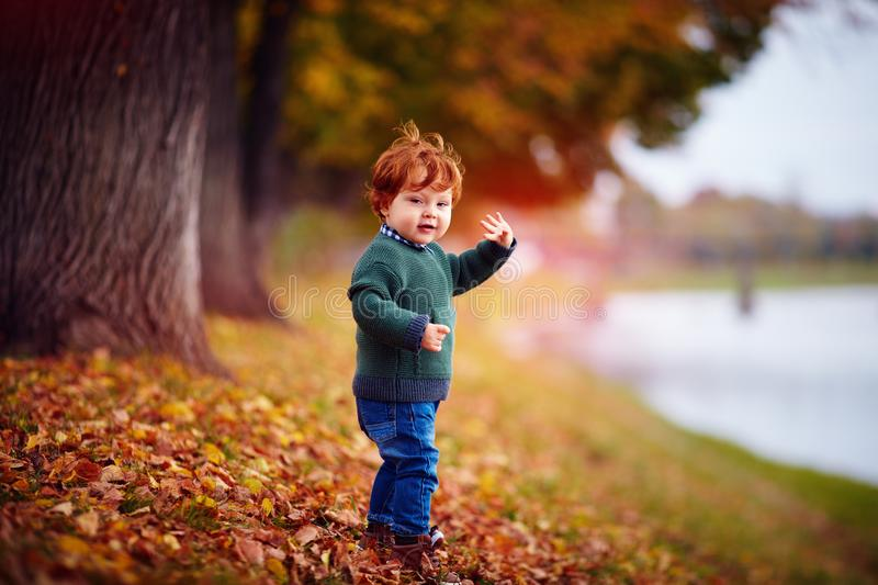Cute redhead toddler baby boy waving hand, walking in autumn park royalty free stock images