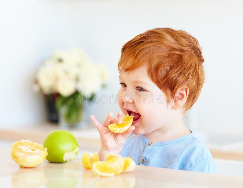 Cute redhead toddler baby tasting orange slices and apples at the kitchen stock images